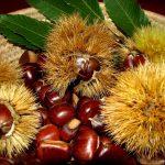 La castanicoltura tradizionale da frutto in Italia, una opportunità per i giovani